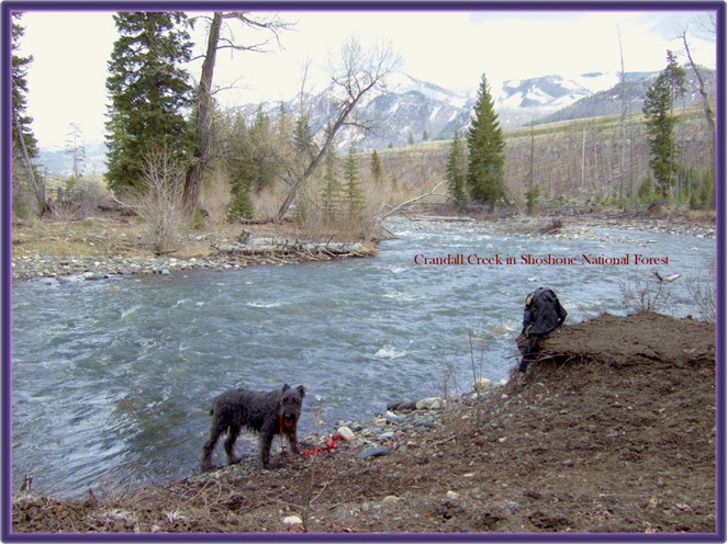 Black Airedale by Crandall Creek in the Beartooth Mountains